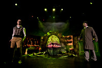 Stage 80's 'Little Shop of Horrors'